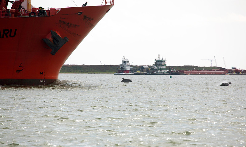 What is this?  Two Porpoises leading the Tanker Eagle Subaru.
