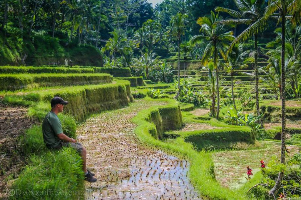Tegallalong Rice Terraces in Bali