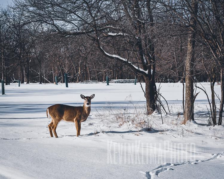 DeerIrvingParkjan2019-2.jpg