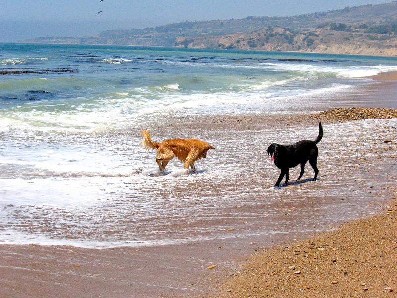 dogs-41.jpg