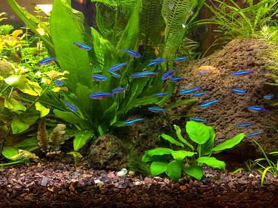 Planted Aquarium #2