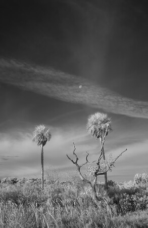 Infrared Landscapes and Scenes