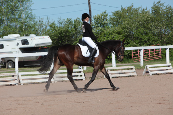 SpringBrook Stables Dressage Show