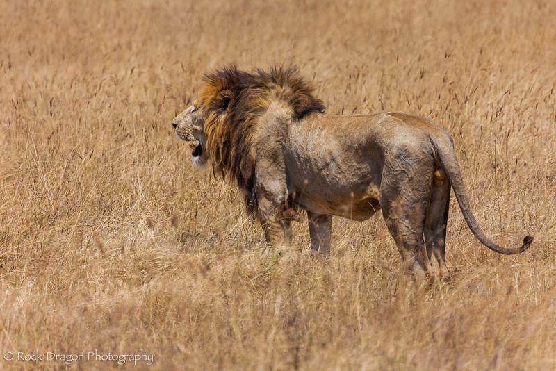 Ngorongoro-62.jpg