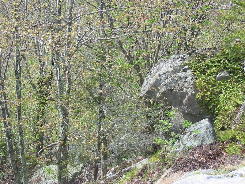 Rock protusion