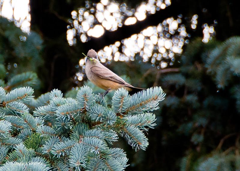 2012  Mystery bird