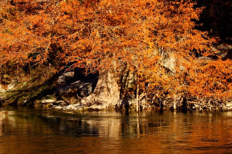 Guadalupe River IMG_6080.jpg