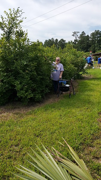 Blueberry Picking 2020