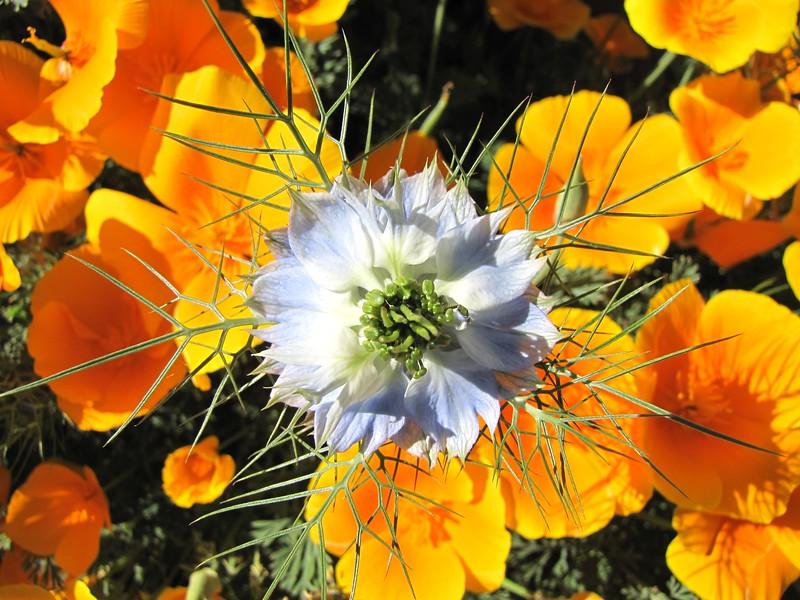 amh FLOWERS (1068).jpg