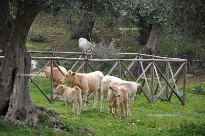 Gargano - Monte Pucci