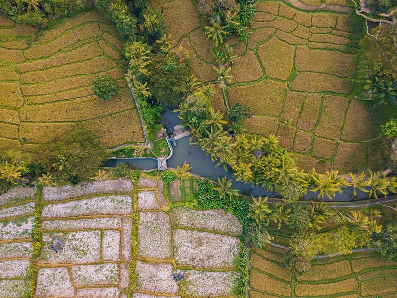 Bali (328).jpg