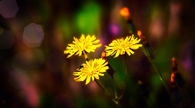 The Magic of Light-145.jpg