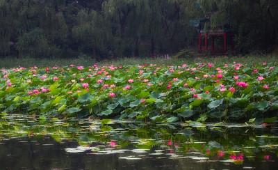 Beijing Lotus 2010