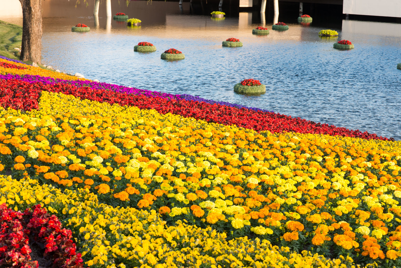 Flower Beds - Epcot Flower & Garden Festival 2016