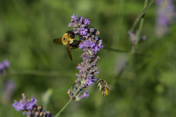2010-07-21 Bees