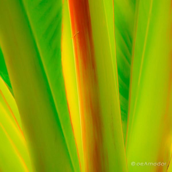 Verde con Rojo 0104-aeamador.jpg