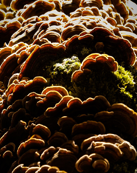 Fungus, Seattle, Washington, 2002