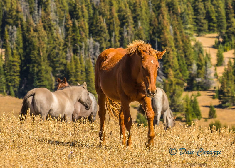 Grazing on the hill-11a.jpg