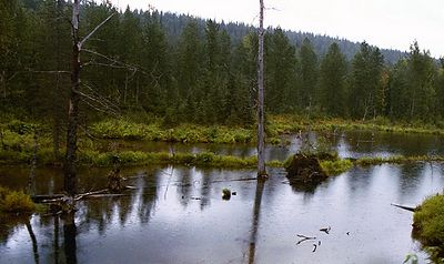 More beaver ponds as we near Anchorage, where the terrain has become more mountainous.