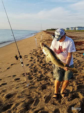 Buck's Snook