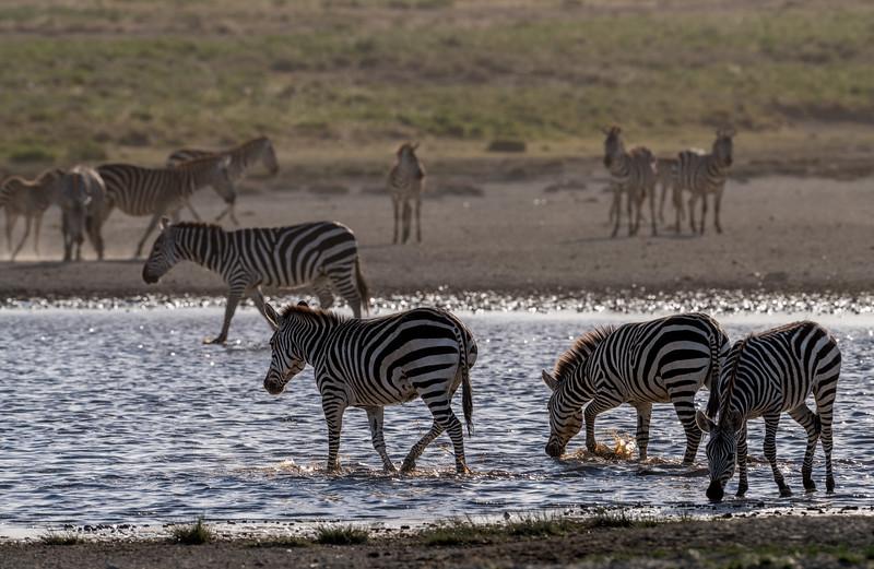 Tanzania_Feb_2018-329.jpg