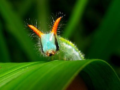 BUGS | насекомые
