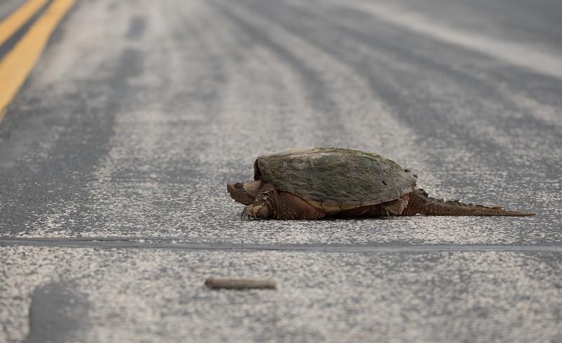 05-21-2020-turtle.jpg