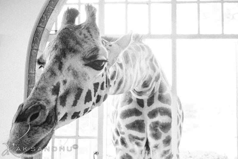 Safari-Africans-087.jpg