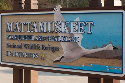 Lake Mattamuskeet - December 2012