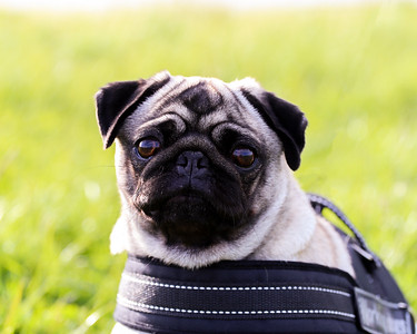 Dog Portrait Shoot - Jodie Leigh