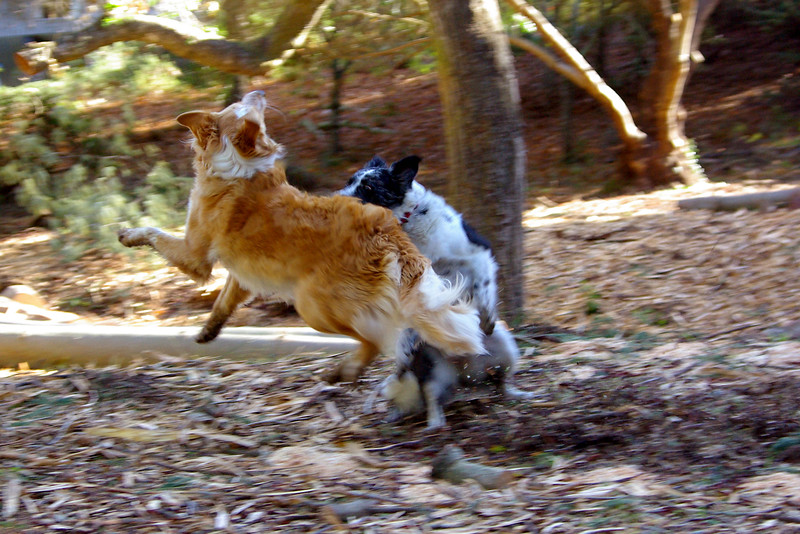 DogDanceIMGP6363.jpg
