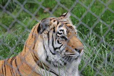 Carolina Tiger Rescue   4/2012