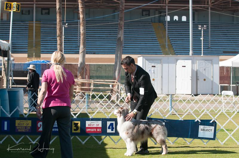 20170205_Australian Shepherds_Lost Dutchman Kennel Club-200.jpg