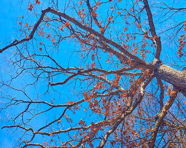 Trees 12162018