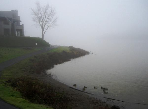 0304 fog.JPG
