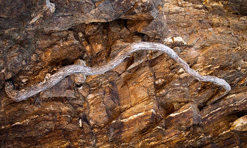 Root, Mojave County, Arizona, 2004