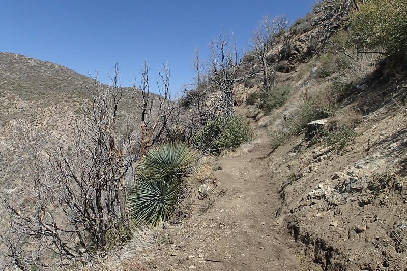 20140316028-Strawberry Peak Trailwork