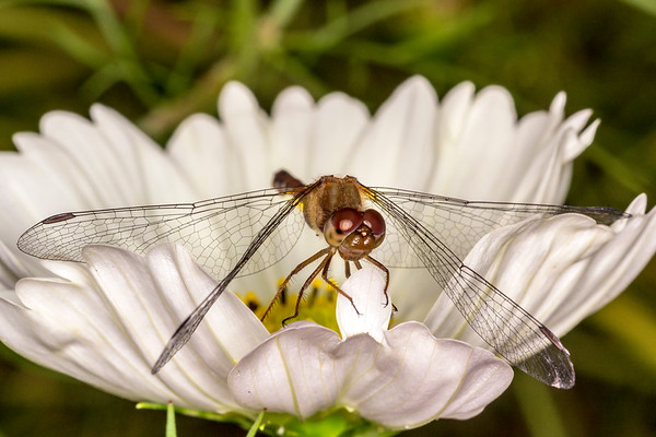 Butterflies, Insects, and Spiders