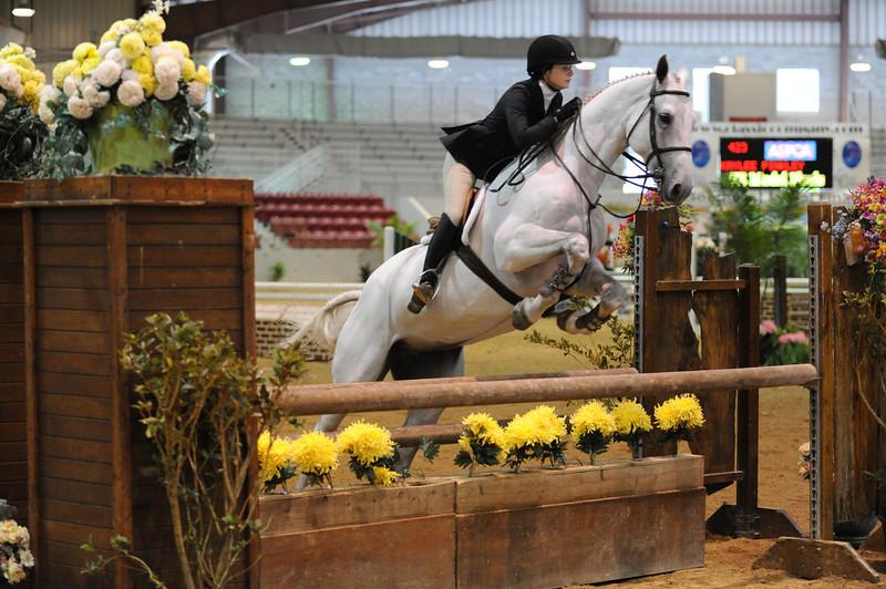 Horse show (10).jpg