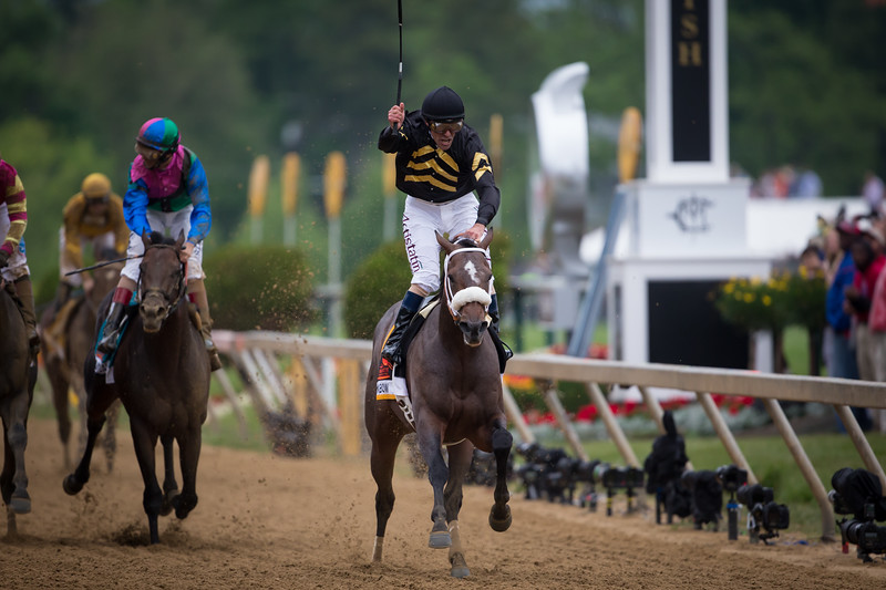 Oxbow (Awesome Again) wins The Preakness Stakes at Pimlico on 5.18.2013.  Gary Stevens up, D. Wayne Lucas trainer, Calumet Farm owner.
