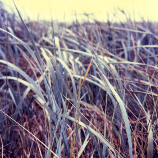 Lindisfarne017.jpg