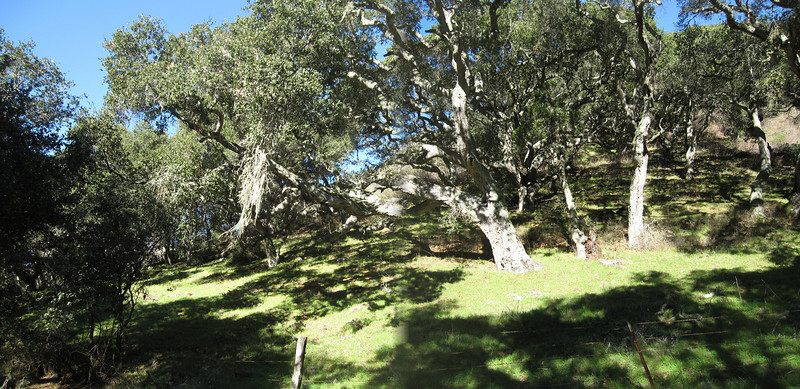 de Anza Trail 1:18:2011 20.jpg