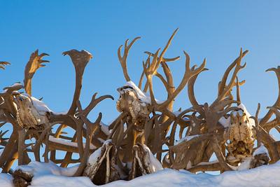 Caribou Antlers as roof adornment. Kotzebue, AK