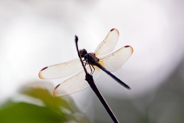 Costa Rica 2011