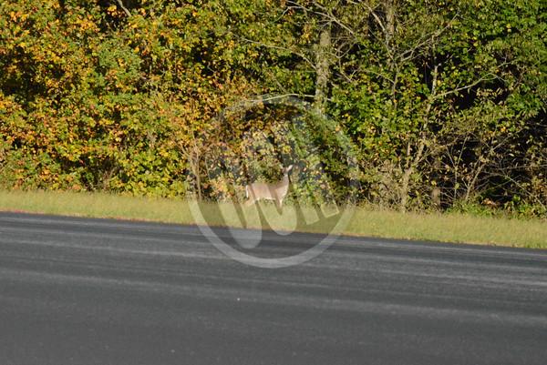 10-22-2014_Deer Collisions Warning