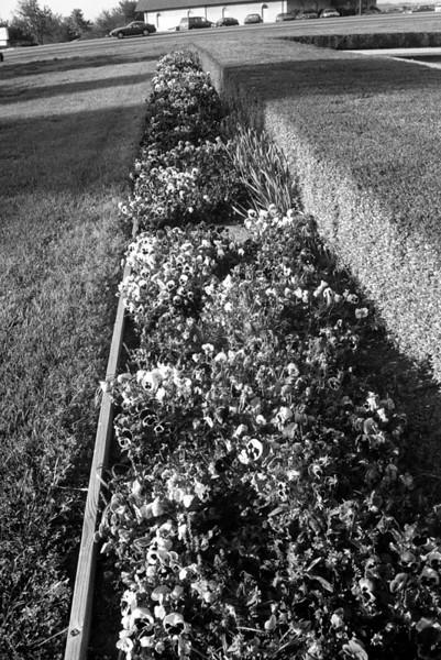 flower beds in front of building.jpg