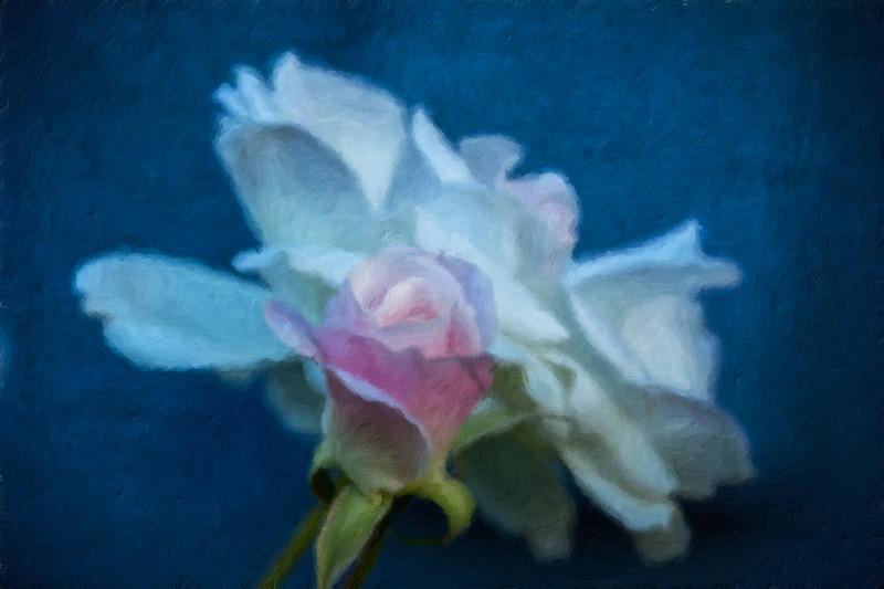 February 8 - Flower-1.jpg
