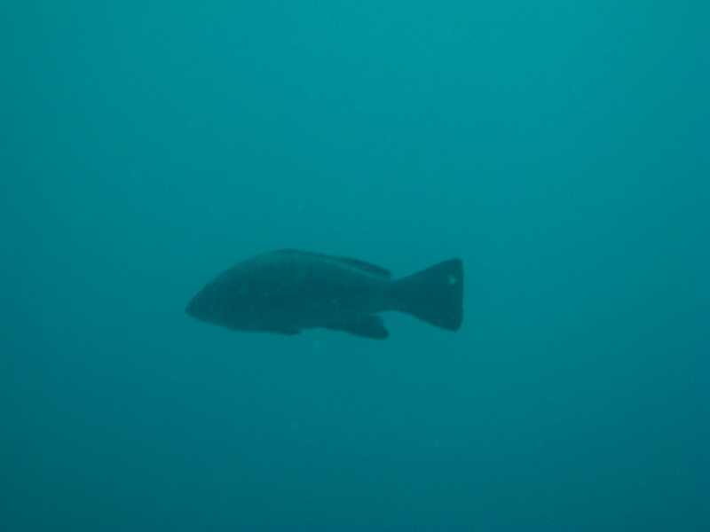 Diving in the Galapagos (335 of 392)