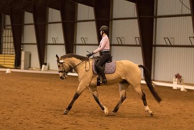 Horse 645