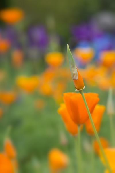 Flowers-7.jpg